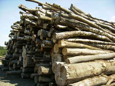 Palivové dřevo humpolec